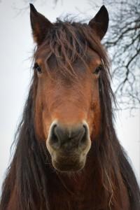 horse-678317_1280