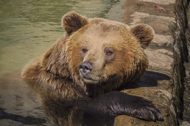 bear-822644_640