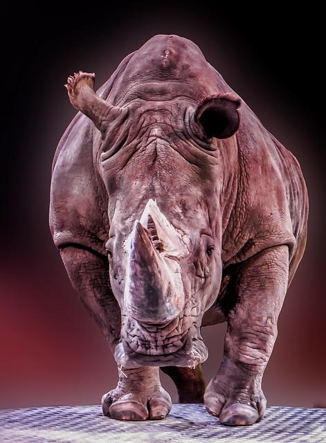 rhino-522519_640