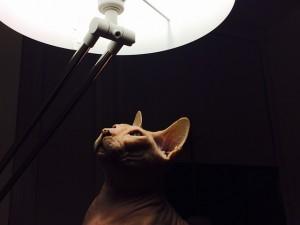 cat-644283_640